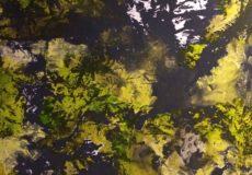 Abstrakt løvskov