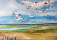 Mågerne letter